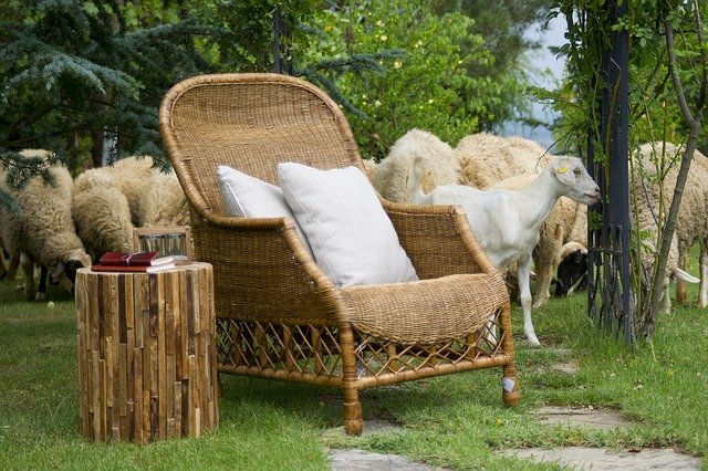 ovce a koza.jpg