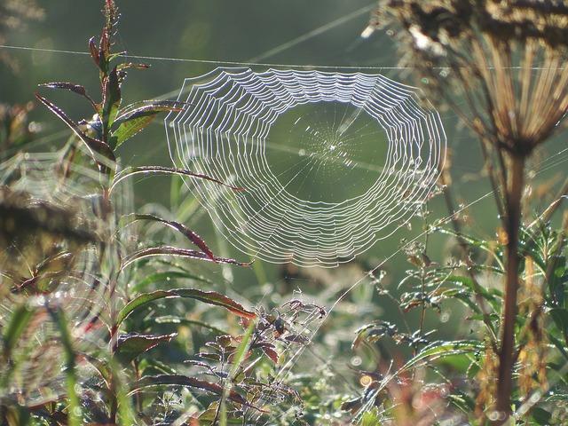 pavučina v trávě