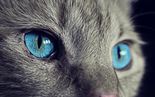 modré kočičí oči