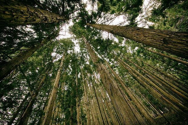 vysoké stromy