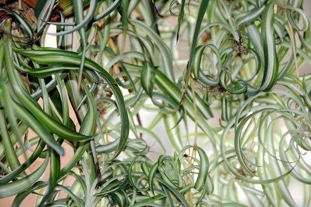 Retro pokojové rostliny jsou zpátky